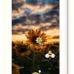 kw28.accenture.app.sunflower