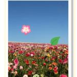 kw29.app.kolibri.laura_s